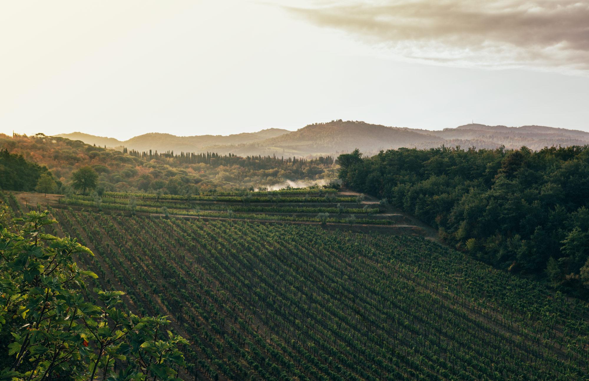 vinefields-terreno-petter-backlund